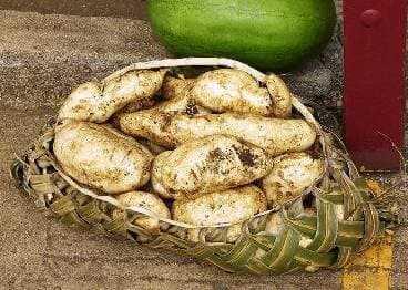 kompress kartofel taro