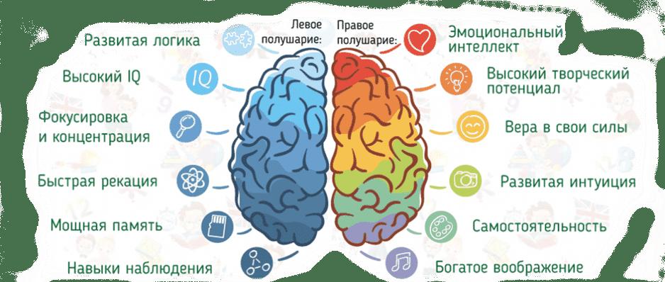 mozg-sinhron